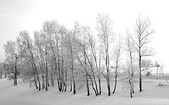 Winter, birkig