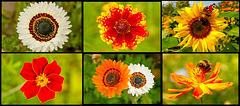 World of Flowers (Emil Nolde Garden)
