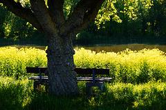 Komm und setz dich! Come and sit down!