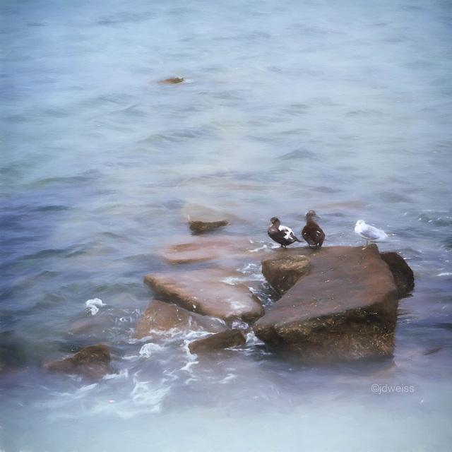 three birds on a rock