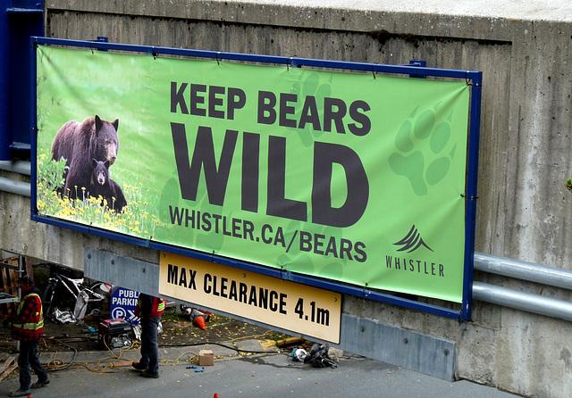 'Keep Bears Wild'