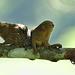 Monkeys EF7A7941