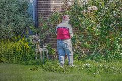 The Gardener   /    June 2020