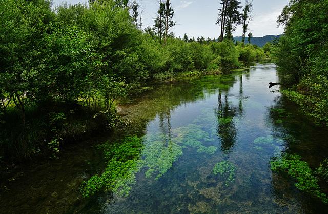 Naturschutzgebiet Pflach