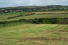 IMG 5366-001-Dunseverick Farms 2