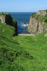 IMG 5368-001-Dunseverick Castle Cliffs