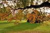 Herbstimpressionen im Park