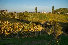 autumn wine - 1