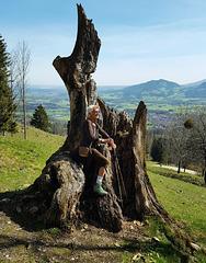 ...der alte Baum ...