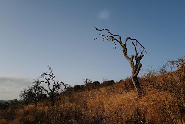 Penedos, Thirsty Land Poetry