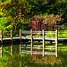 Japanese Garden Boardwalk