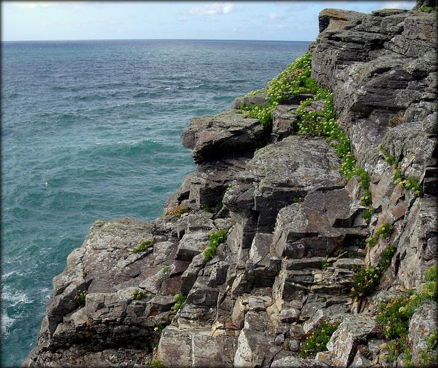 Granite and rock samphire