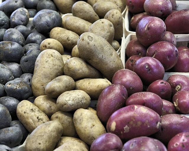Potatoes – Marché Jean-Talon, Montréal, Québec, Canada