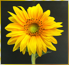The summer bloom... ©UdoSm