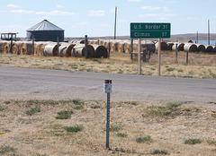 Cow buffet climax / Buffet pour vaches à son apogée
