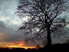 the tree 01