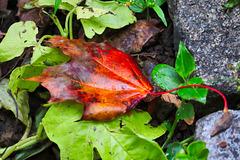 1 (10)..austria autumn