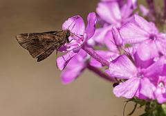 Butterfly.  9037885