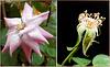 Collage Hagebutte / Rosehip. ©UdoSm