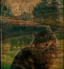 Le chat derrière la vitre.