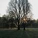 Sun & Trees 1