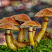 A group of famous mushrooms posing in a flurry of flashbulbs