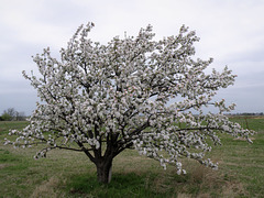 AN ORCHARD AT THE BOTTOM OF A HILL