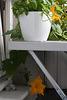 Kürbispflanze unter dem Tisch