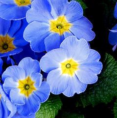T like TENDER blue