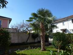 le palmier chez MOMO