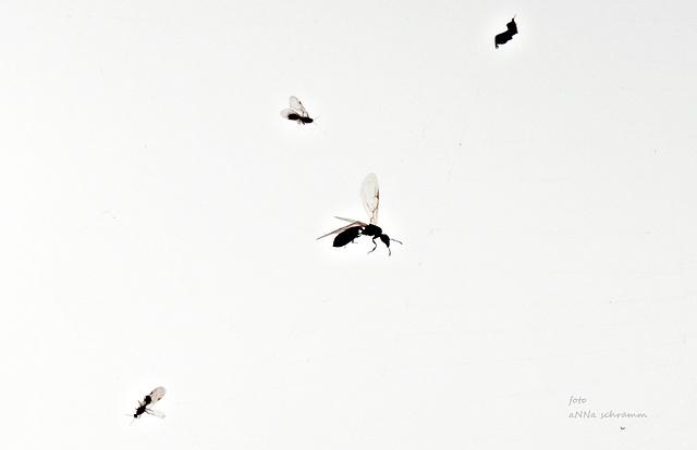 Am Spinnenfaden gefangen