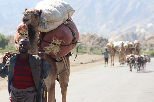 Afar Man with Camel