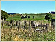 In Long Grass.
