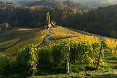 autumn wine - 3