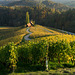 autumn wine - 3