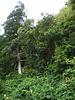 Hillside vegetation.