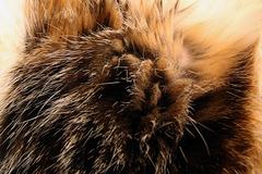 Cuby 's fur
