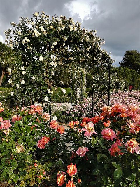 Rose Garden, El Retiro Park, Madrid