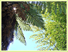 Tree Fern and Bamboo