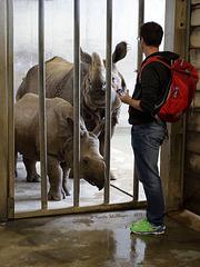 Besucher bei den Nashörnern (Wilhelma)