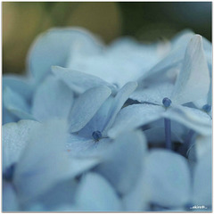 ...soft colors...
