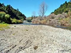 Banks of Whakatane River