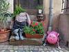 Eguisheim Alsace