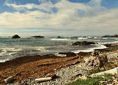 Rocks, wood, sea