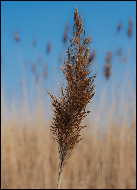 Die Spreu vom Weizen trennen
