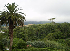 Countryside and Pico Alto with fog on top.