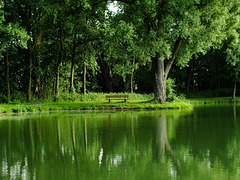 Grüne Stunde am Teich