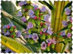Je ne connais pas le nom de cet arbuste avec ces jolis fleurs ! Neira je compte sur toi ? merci d'avance
