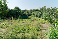 Bientôt du béton à la place de ces jardins.