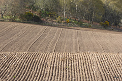 By eck, she can plough a straight furrow!
